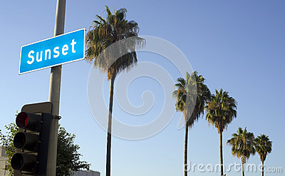 Sunset Blvd Row of Palm Trees Hollywood California
