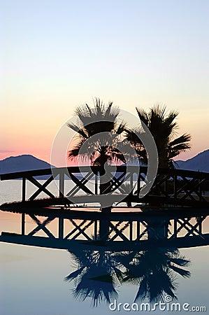 Sunset bridge and palm trees