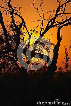Sunset in the Bushveld #2