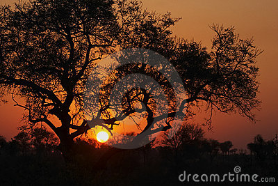 Sunset in the Bushveld #3
