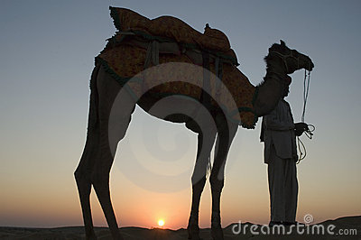 Sunset camel Editorial Photography
