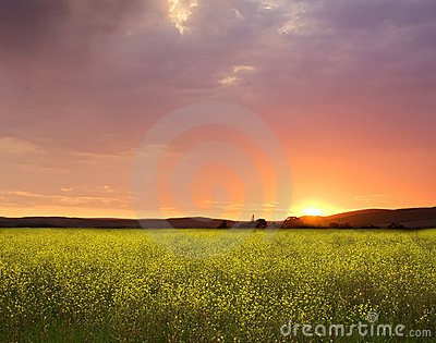 Sunset canola fields landscape