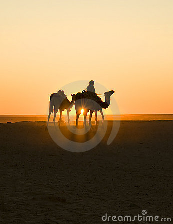 Sunset caravan in sahara