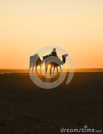 Sunset caravan in sahara