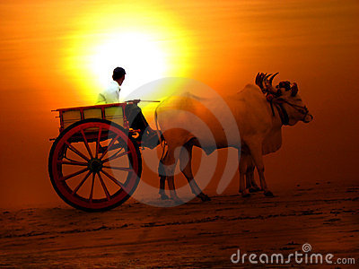 Sunset Cart