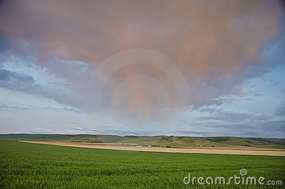 Sunset clouds over wheat fields