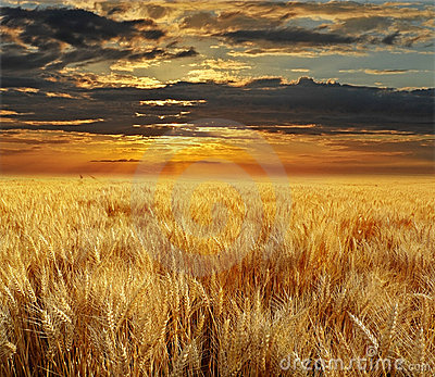 Sunset and field