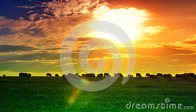Sunset and field wallpaper