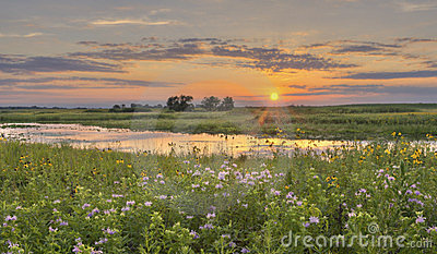 Sunset at Flower Field