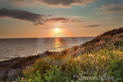 Sunset flower meadow and ocean spring colors