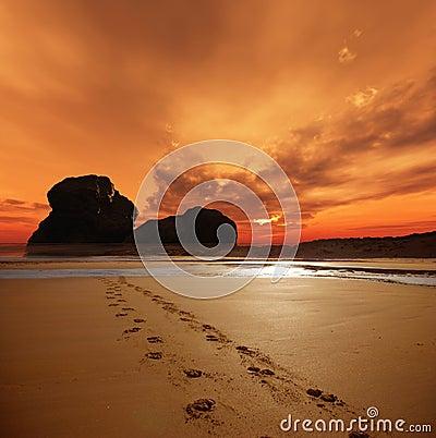 Free Sunset Footprints Royalty Free Stock Photo - 13583755