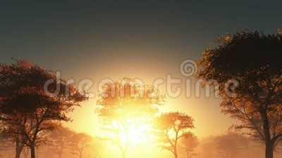 Sunset and forest in fog. Sunset and yellow forest in fog