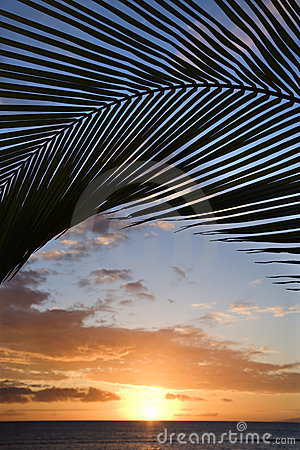 Free Sunset Framed By Palm, Maui. Stock Photography - 2044502