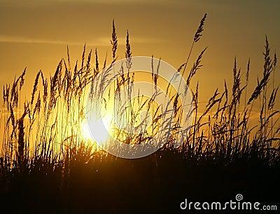 Sunset & Grass