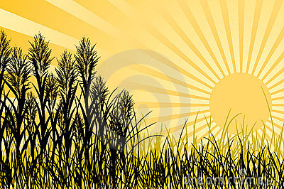 Sunset and grass, vector