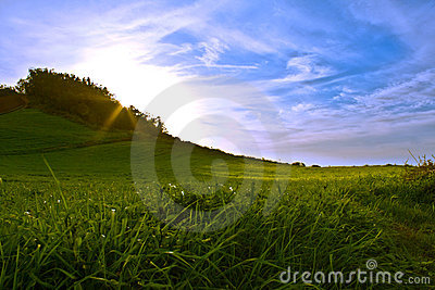 Sunset in a green field