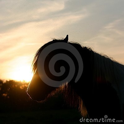 Sunset horse silhouette