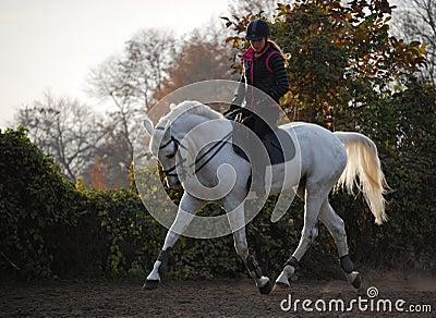 Sunset horseriding