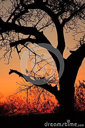 Free Sunset In Sabi Sands Stock Image - 5569911