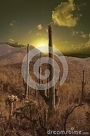 Free Sunset In The Desert Stock Images - 1001214