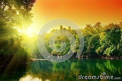 Sunset in jungle