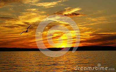 Sunset on a lake and the silhouette of gull