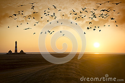Sunset Lighthouse with migratory birds
