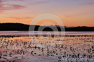Sunset on lilly pad lake
