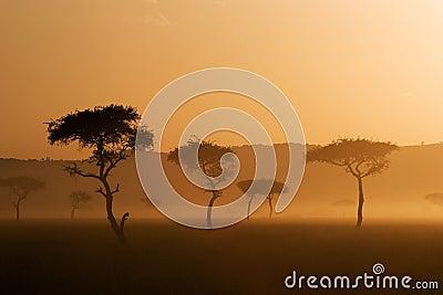 Sunset in Massai Mara