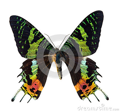 Free Sunset Moth Royalty Free Stock Images - 40740829