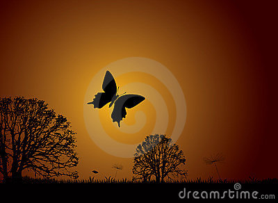 Sunset nature butterfly