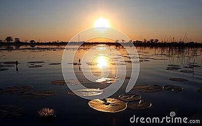 Sunset in Okavango Delta, Botsuana