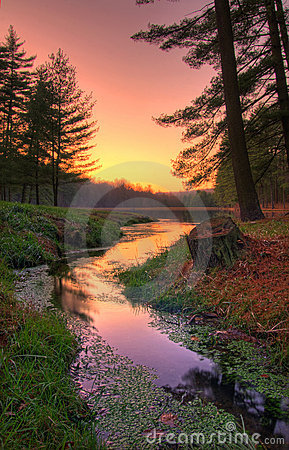 Free Sunset On A Remote Forest Lake Stock Photos - 14298773