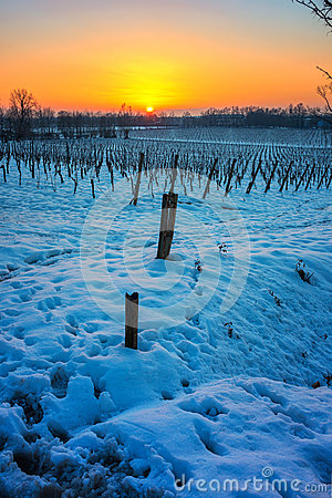 Free Sunset On Snowy Vineyard Stock Image - 49986031