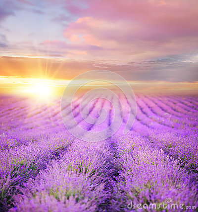 Free Sunset Over A Summer Lavender Field. Royalty Free Stock Photography - 96593047