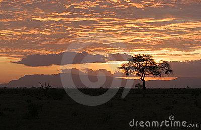Sunset over African safari