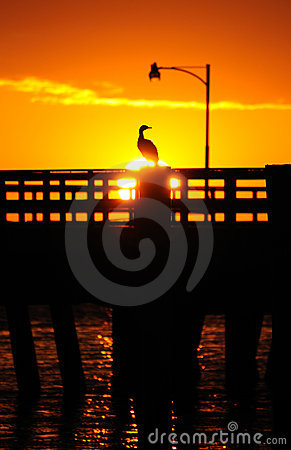 Sunset over bird on pier
