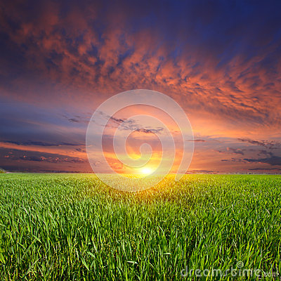 Free Sunset Over Green Meadow Royalty Free Stock Images - 35901969