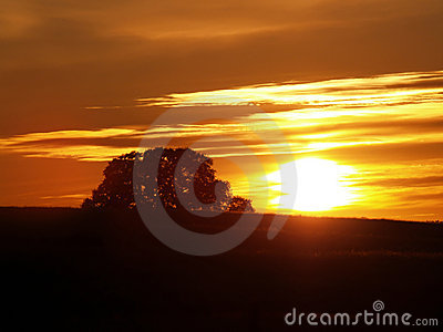 Sunset over hill with canopy of oak tree