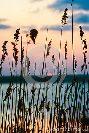 Sunset over lake seen through the grass