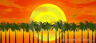 Sunset over palm tree