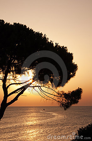 Sunset over tree and sea