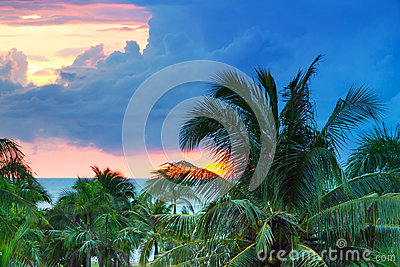 Sunset over tropical palm trees