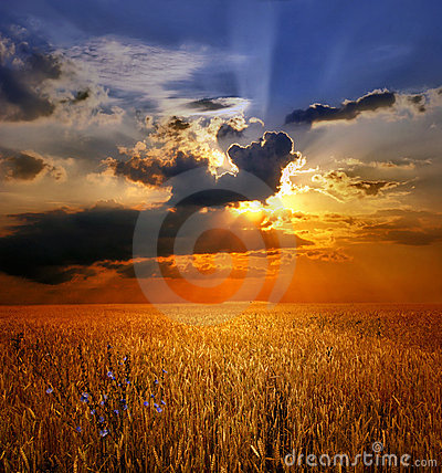 Free Sunset Over Wheat Field Stock Image - 6187171