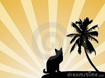 Sunset, palm, cat