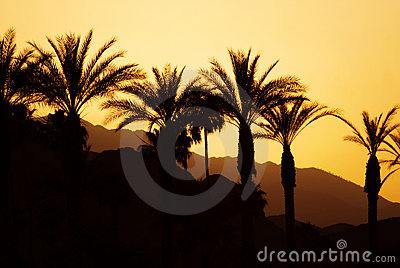 Sunset Palm Springs