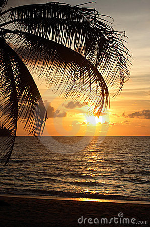 Sunset with palm tree