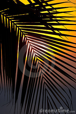 Sunset through a palm tree frond