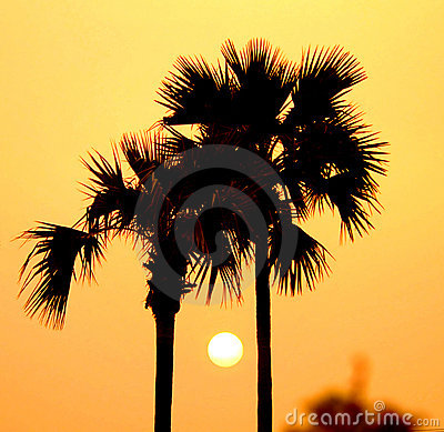 Sunset between palm trees