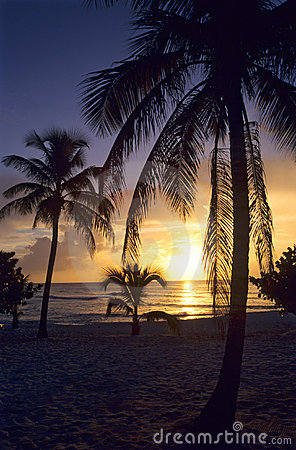 Sunset on palm trees at Bayahibe beach